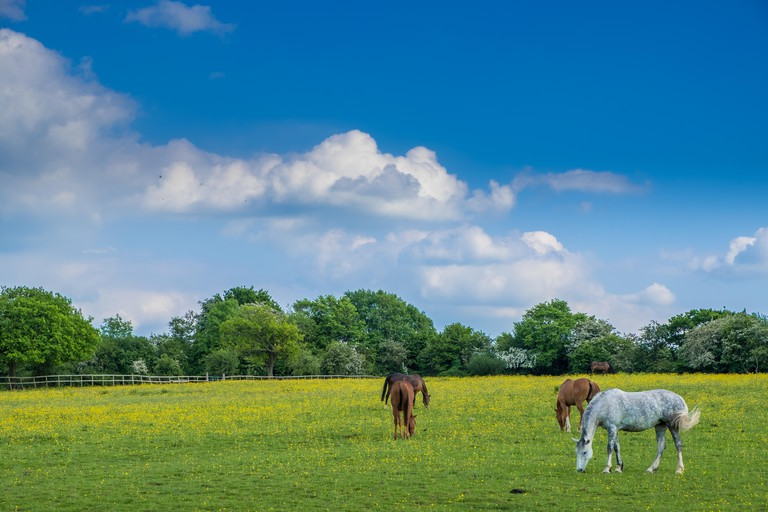 J7K0F2 Horses Grazing in Woodgate Valley Country Park