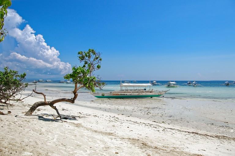 bent, soliter tree, growing on the edge of Mindanao sea, on Dumaluan beach on Panglao island, with boat in backround