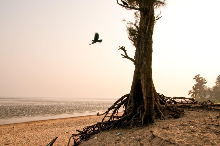 Beautiful scene of sea beach with tree and flying bird on the foreground at Chandipur, Orissa, India.