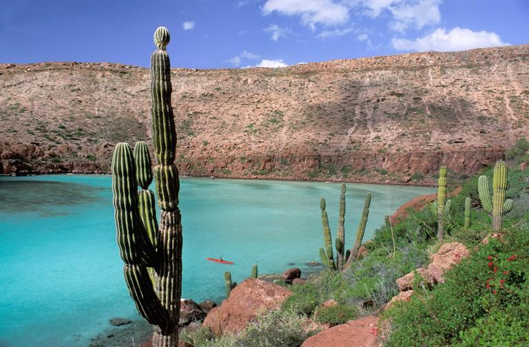 Mexico, Baja California, Paz, Sur, Isla Espiritu Santo, Sea of Cortez,