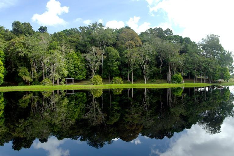Jungle forest relections in the lake at Tasek Merimbun, Negara Brunei Darussalam.