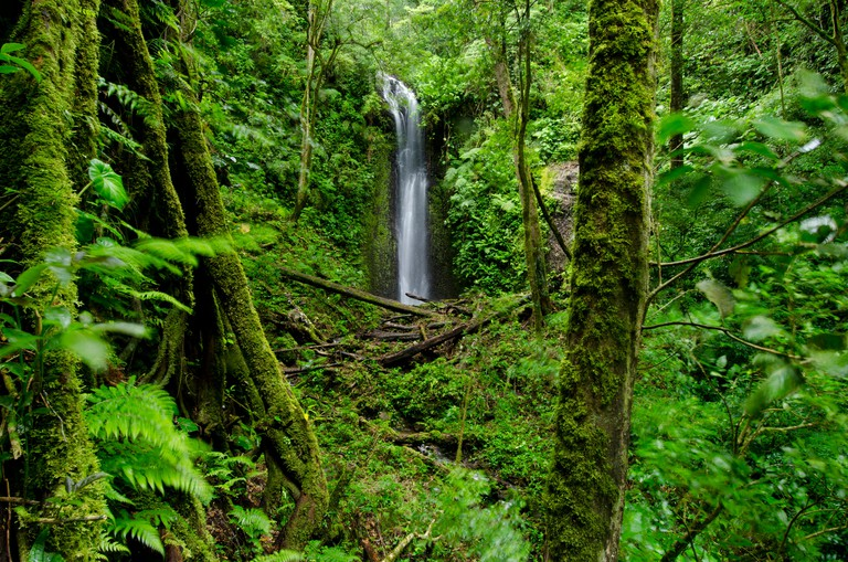 Waterfall at cloud forest, La Amistad international park
