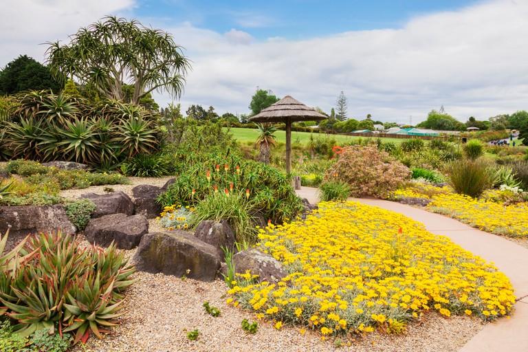 The African Garden at Auckland Botanic Gardens, New Zealand.