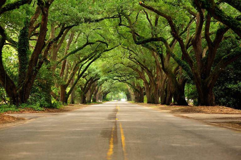 Aveune of Oaks, Aiken, South Carolina.