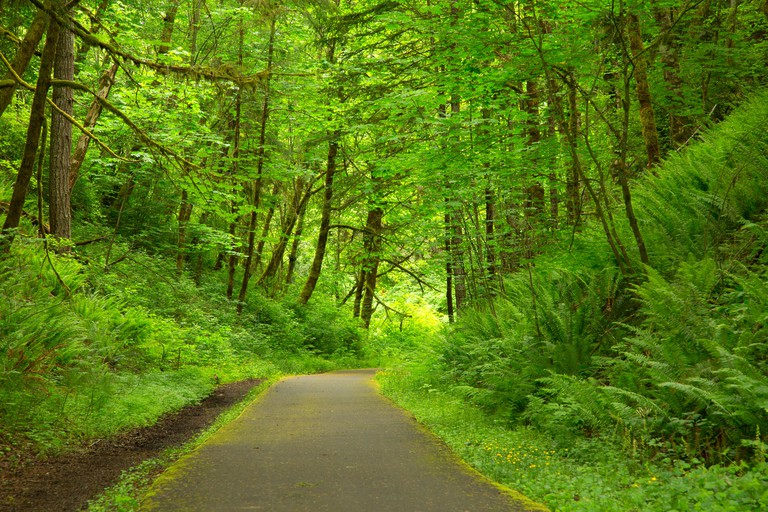 Rail trail, Banks-Vernonia Linear State Park, Stub Stewart State Park, Oregon.
