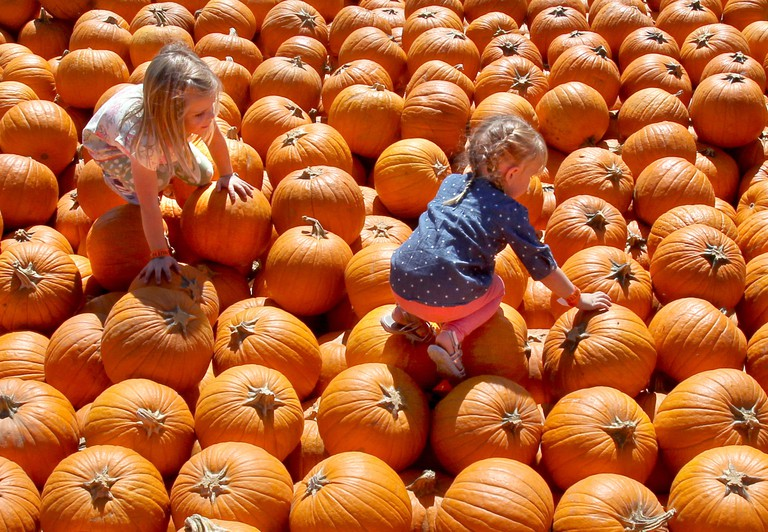 Oct. 13, 2014 - San Diego, California, United States - October 13, 2014_Valley Center, California_USA_  Pumpkin Explorers- Annlie Nelson, 4, at left of Vista, and friend Elizabeth Entzminger, 3, at right of Oceanside, climb through the available pumpkins