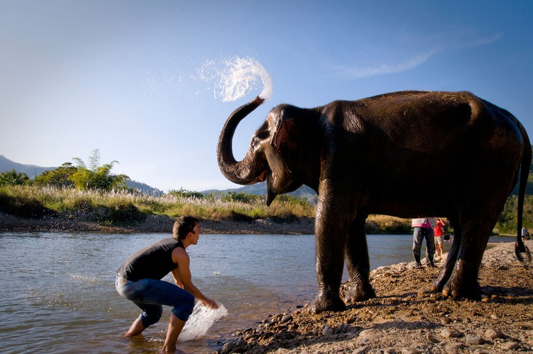 THAILAND, NORTH OF CHIANG MAI: Lek's elephant farm for rescued elephants, a place for alternative elephant tourism.