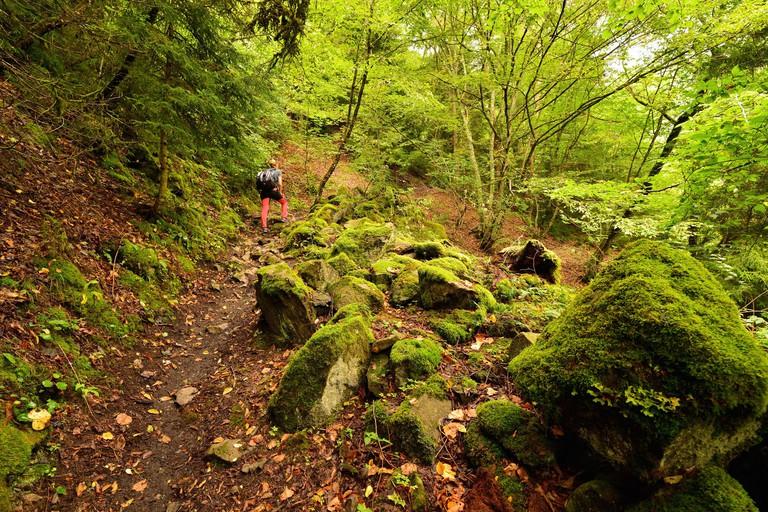 Borjomi-Kharagauli National Park__PKRBND