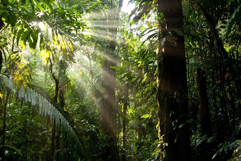 Sun rays in the dense jungle of the Braulio Carrillo National Park, Costa Rica, Central America