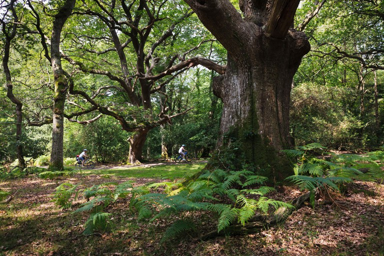 Cyclists on a forest trail near Linwood, New Forest National Park, Hampshire.