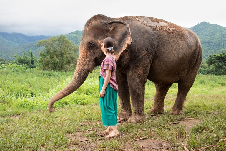 North of Chiang Mai, Thailand. A girl is stroking an elephant in a sanctuary for old elephants.