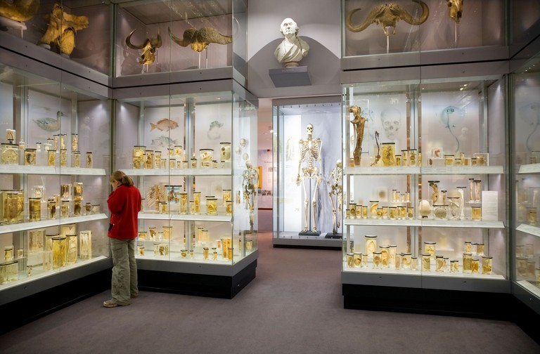 Crystal Gallery, Hunterian museum. The Royal College Surgeons, Lincoln's Inn, London. UK.. Image shot 2012. Exact date unknown.