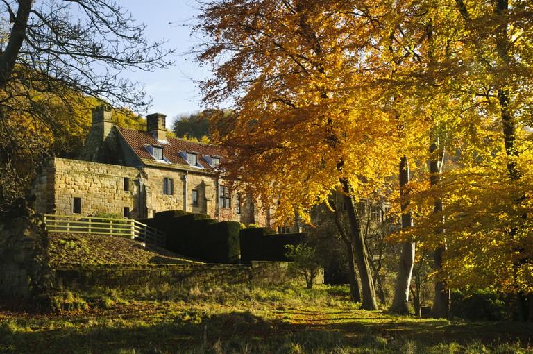 Common Beech (Fagus sylvatica) mature trees, in autumn colour, Osmotherley, Hambleton Hills, North York Moors N.P., North Yorkshire, England, November