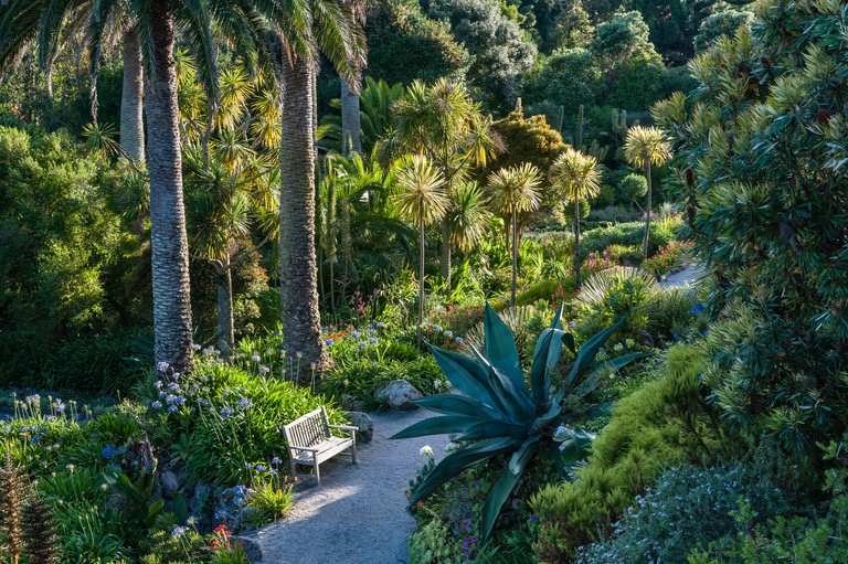 Tresco Abbey Garden, Isles of Scilly, UK. The Middle Terrace is the most sheltered part of the garden