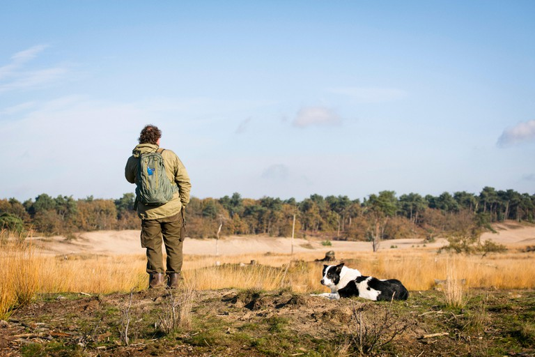 """Shepherd with his border collie sheepdog at National Park the """"Loonse en Drunense Duinen"""" in the Netherlands"""