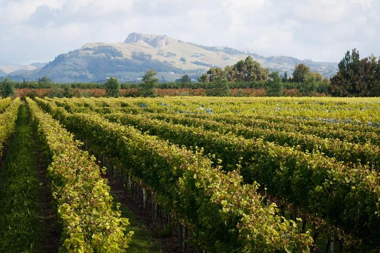 Winery, Mill Road, Haumoana, Hawkes Bay, North Island, New Zealand.