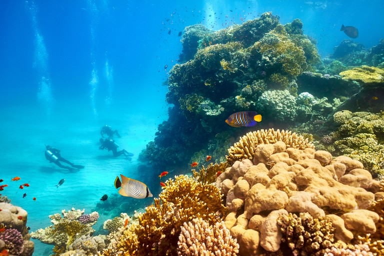 Red Sea - underwater view at scuba divers and the reef, Marsa Alam, Egypt
