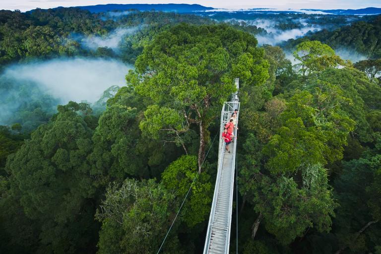 Jungle canopy walk at Ulu Temburong National Park; Brunei