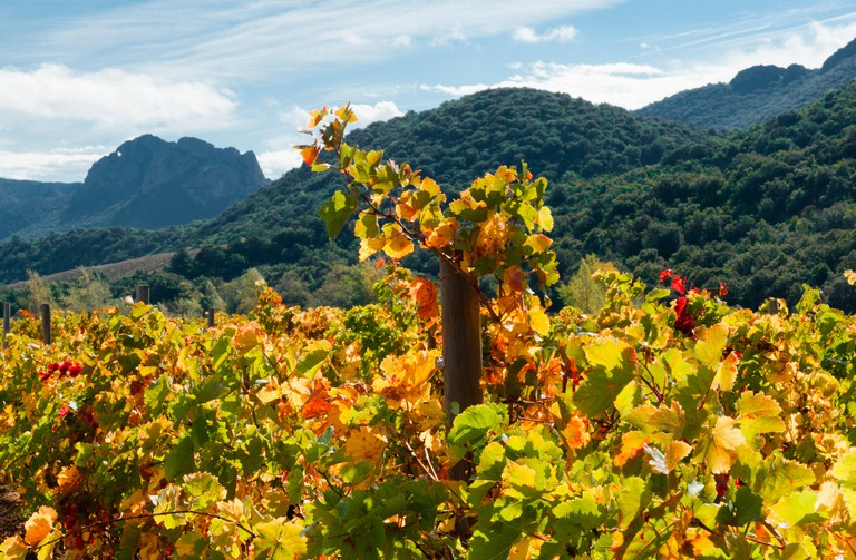 Autumn in the Vallee de l'Agly, an AOC wine growing area near Perpignan, France
