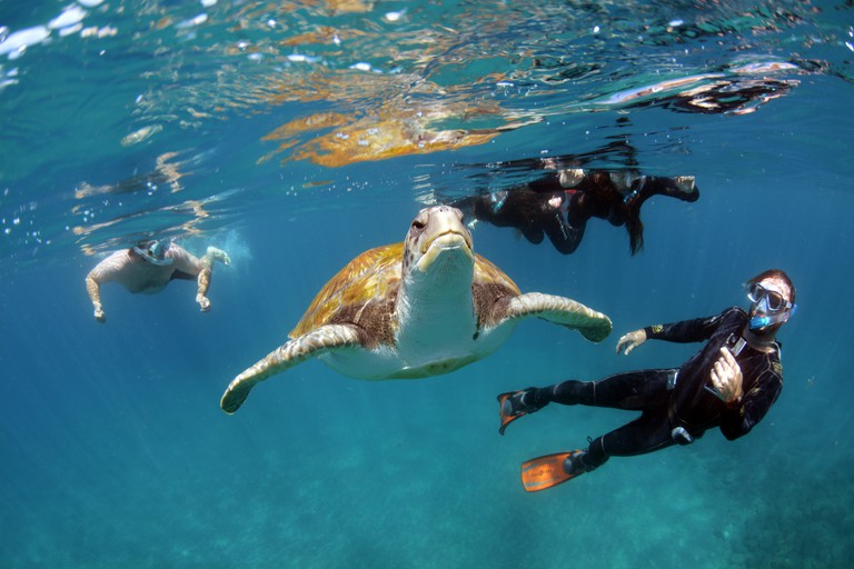 Swimming with a green turtle,Costa Adeje, Tenerife