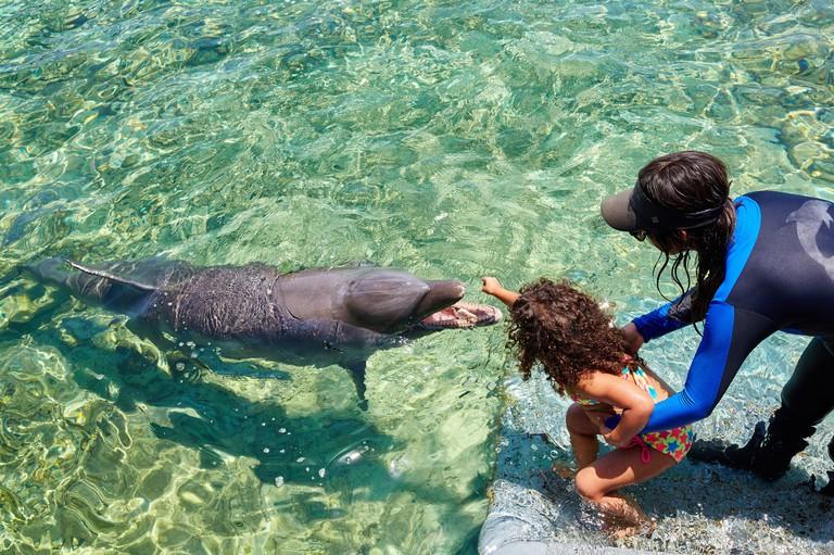 Bottlenose Dolphin (Tursiops truncatus), Oceanarium, San Martin de Pajarales island, Rosario Islands, Cartagena de Indias, Bolivar, Colombia, South