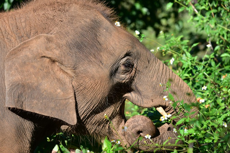 HR61J2 Baby Elephant in Elephant Rescue Park (Chiang Mai - Thailand)