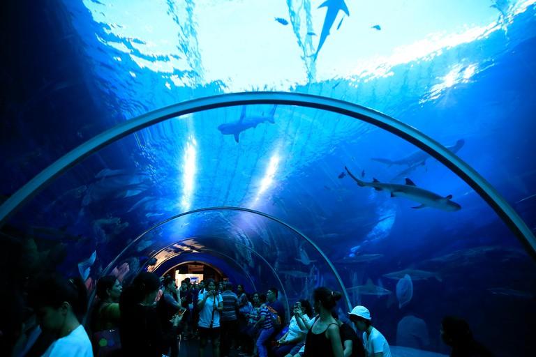 Tourists at s.e.a. aquarium. sharks. sentosa island. singapore. singapore.