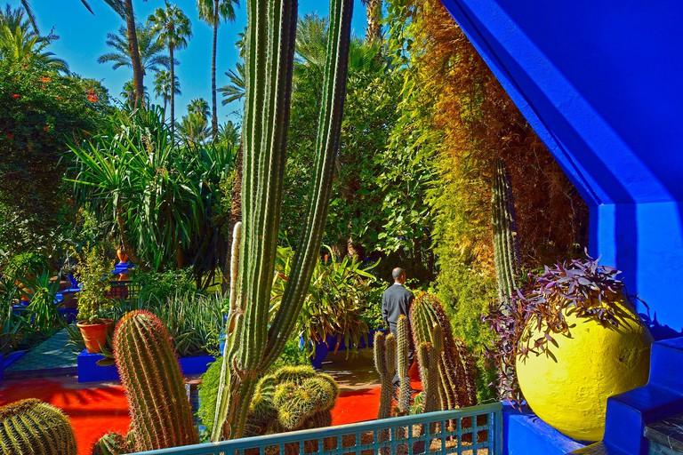 Jardin Majorelle, Marakesh, Morocco.