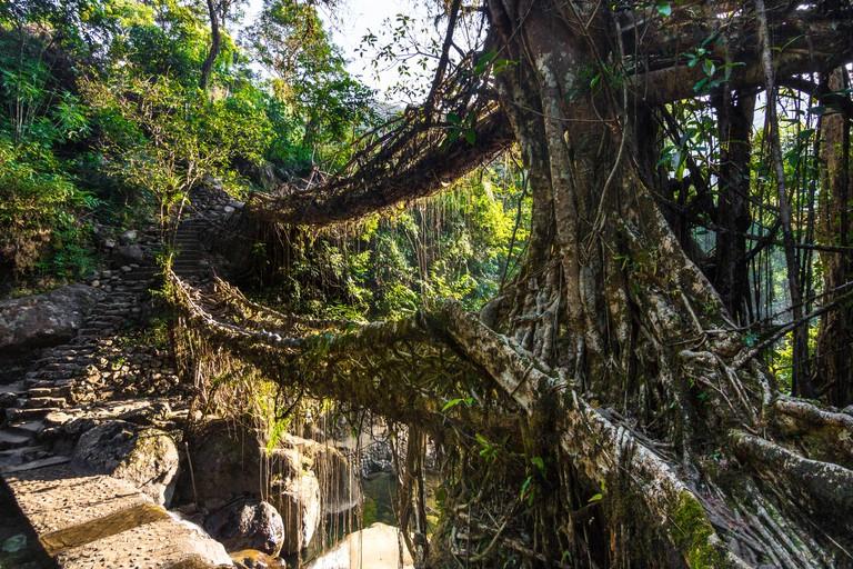 The double decker living root bridges of Nongriat in Meghalaya, India