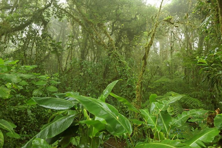 Monteverde Cloud Forest Reserve, Costa Rica, Puntarenas, Monteverde