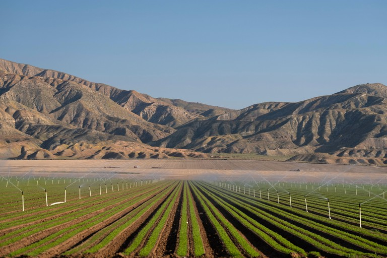 new crops under irrigation in the dry Cuyama Valley of California