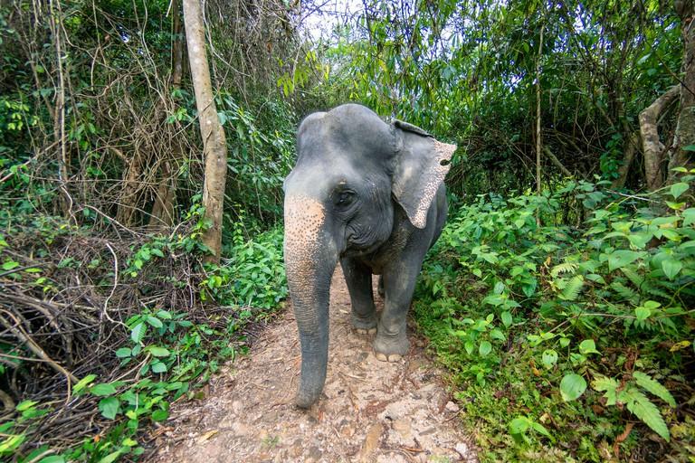 Thailand, province of Phuket, Phang Nga Elephant Park