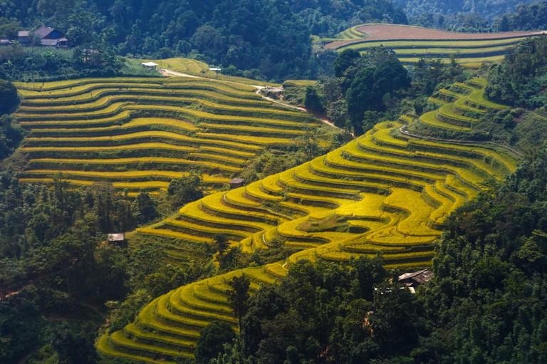 terraced rice fields in Hoang Su Phi in Ha Giang province in Vietnam.