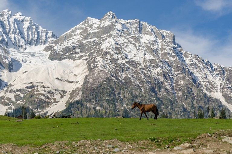 Lone horse framed in front of snow patched mountains in Sonamarg, Jammu and Kashmir, India