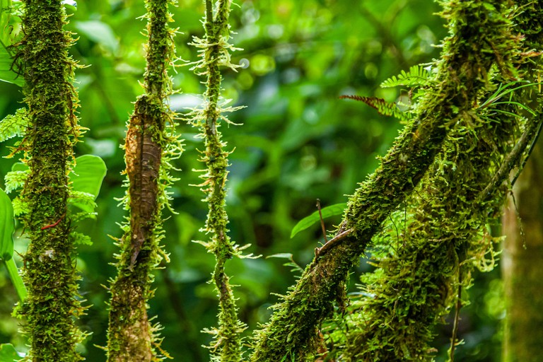 National Park of Tapanti near Orosi, Costa Rica