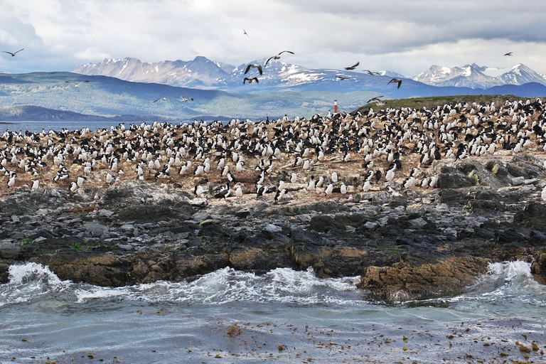 Birds and penguins on the island in Beagle channel close Ushuaia city, Tierra del Fuego, Argentina