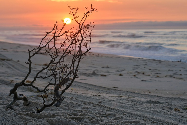 Bare Tree On Beach Against Sky During Sunset