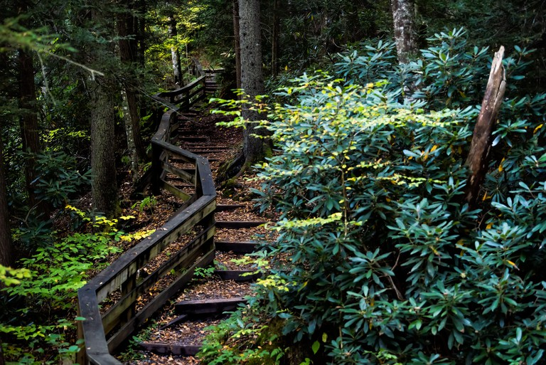 Wooden boardwalk steps stairs hiking trail to Falls of Hills Creek waterfall in Monongahela national forest at Allegheny mountains, West Virginia