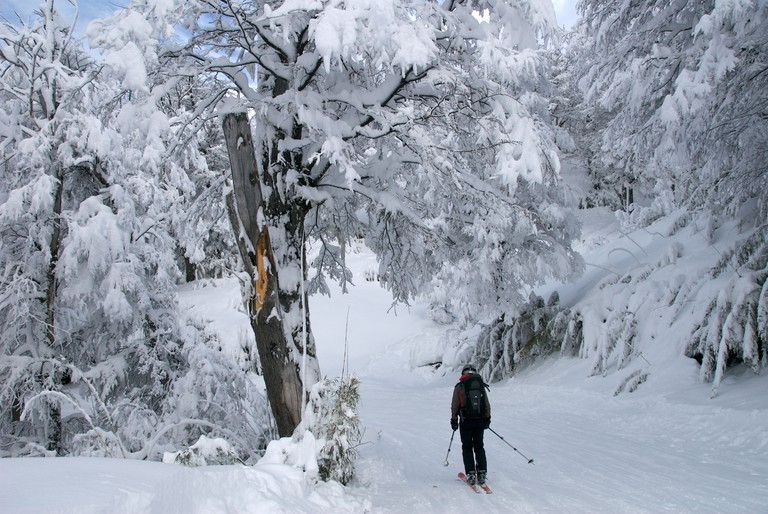 Skier in the forest after a heavy snowfall in Cerro Catedral Argentina.