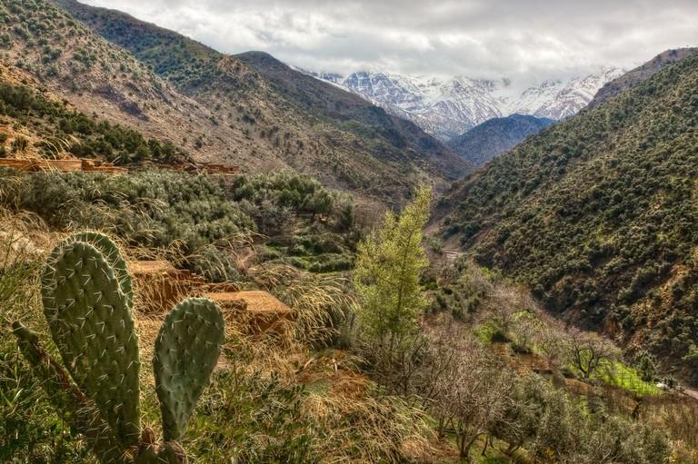 Cactus in Azzaden Valley, Toubkal National Park, High Atlas, Morocco