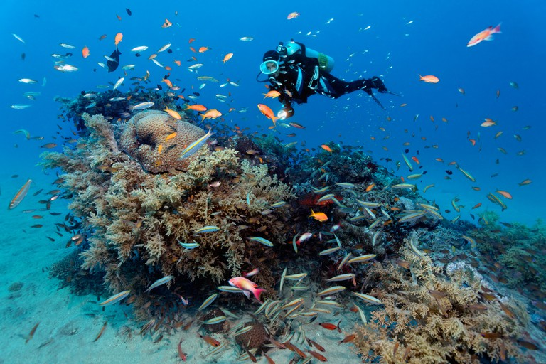 Diver watching many different fishes on a coral block, Makadi Bay, Hurghada, Egypt, Red Sea, Africa