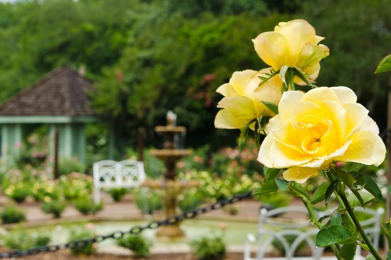 USA, Florida. Harry P. Leu Gardens Orlando, Florida.