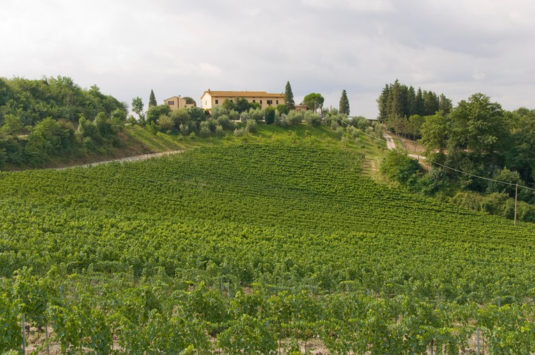 A vineyard in Siena, Tuscany