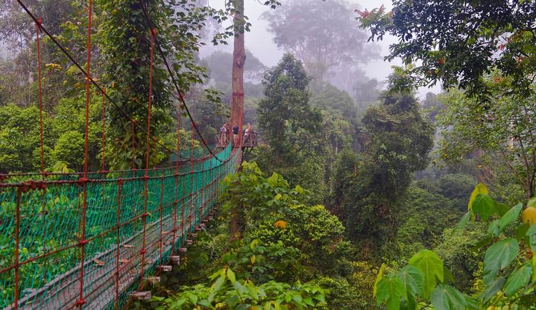 FJ5EPJ canopy walkway in the dipterocarp rainforest of Danum Valley, Malaysia, Borneo, Sabah