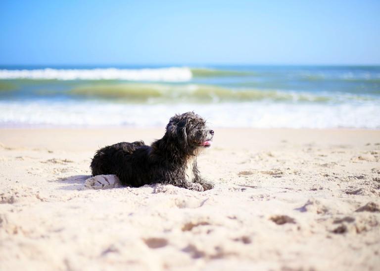 Small Dog at the Dog Park, Florida, USA