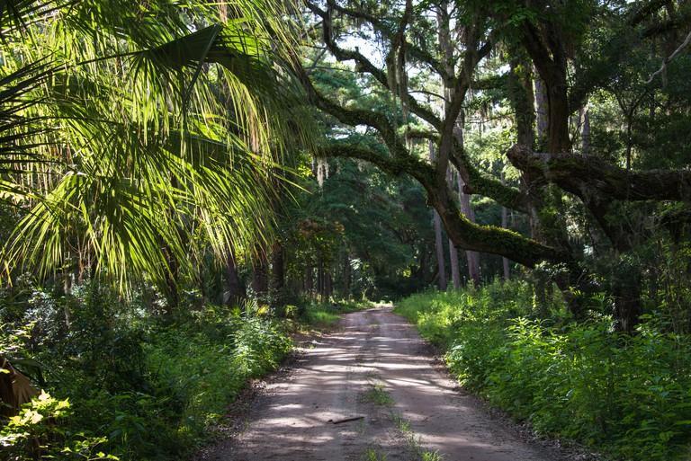 Palmetto Forest