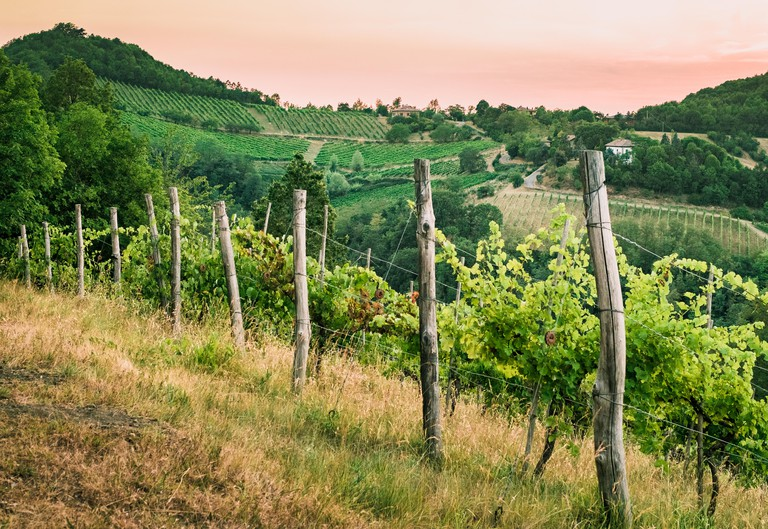JGTF80 vineyards on the hills in southwest of Bologna, Italy.