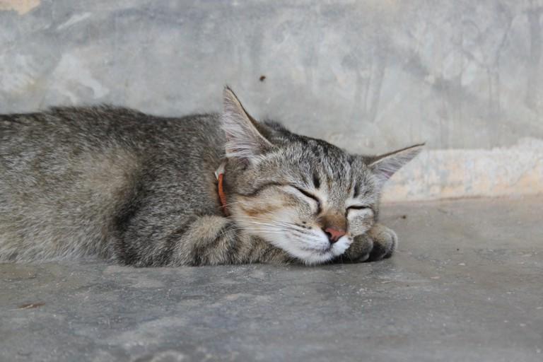 Cat from Lanta Animal Welfare on Koh Lanta, Thailand.