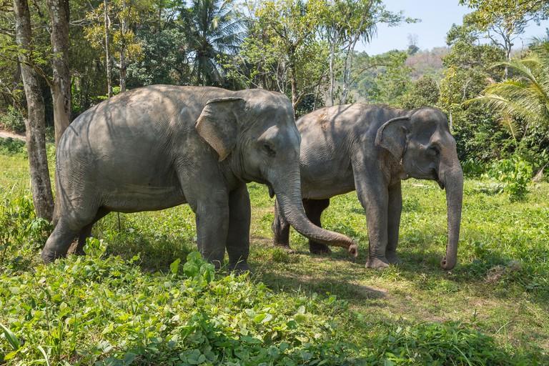 Elephant enjoying retirement in a rescue sanctuary - M5PKKF
