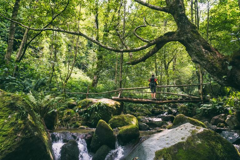 Mtirala National Park by George Khelashvili.jpg1
